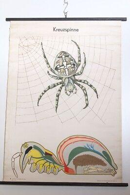 Schulwandkarte Role Map Wall Chart Garden Spider Gothic Vintage Original