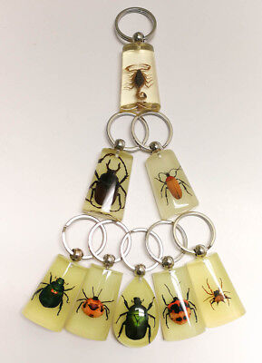 8 pieces Real Insect Keychain,assorted bugs in acrylic, glowing in the dark