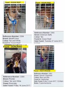 City of JOONDALUP lost & found pets Ocean Reef Joondalup Area Preview