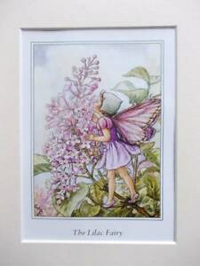 LILAC Flower Fairy, Cicely Mary Barker in 10in x 8in Ivory Mount 8 x 6 Print