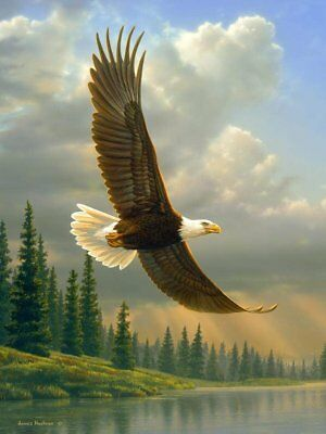 James Hautman Summertime Eagle Raschel Plush 60x80 Twin Size Throw/Blanket for sale  Minneapolis