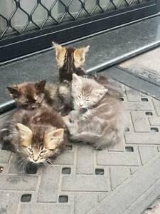 1 kitten remaining