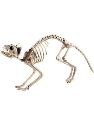 CAT SKELETON PROP FANCY DRESS ACCESSORY - Cat Prop