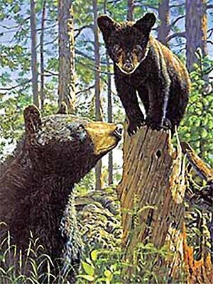 3D Lenticular Poster - 3 Black Bears -12x16 Print Animated - 3 prints in 1