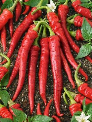 Pepper- Cayenne Red- 100 Seeds -   Pepper 100 Seeds