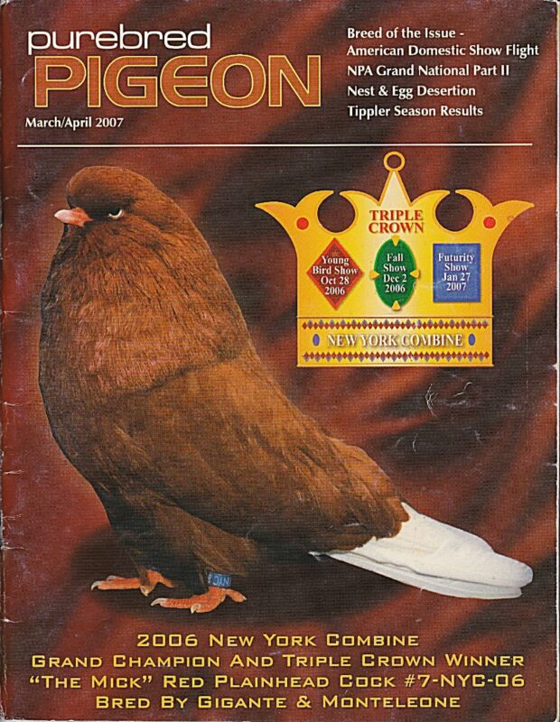 PUREBRED PIGEON ~ 2007 DOMESTIC SHOW FLIGHT~ OUT OF PRINT