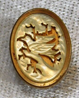 ATQ VICTORIAN Bird Pigeon Carved Pearl Gold Filled Cameo Picture BUTTON 3/4''