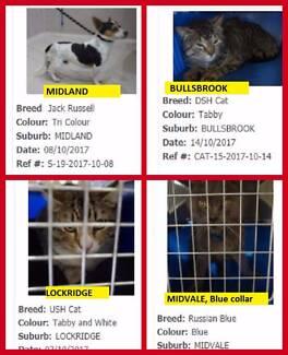 Wanted: Found pets  City of SWAN / Gidge / Bullsbrook / Ellenbrook etc