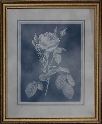 Rose Aquatinta dekorativ gerahmt