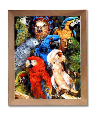 Nine Tropical Parrots Bird Collage Outdoor Wall Picture Honey Framed Art Print ()