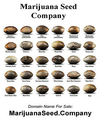 MARIJUANA SEED - Cannabis & Marijuana Niche Domain Name: MarijuanaSeed.Company