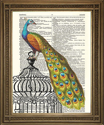 PEACOCK ON BIRD CAGE ANTIQUE DICTIONARY BOOK PAGE ART: Lovely Vintage Print (Peacock Bird Cage)