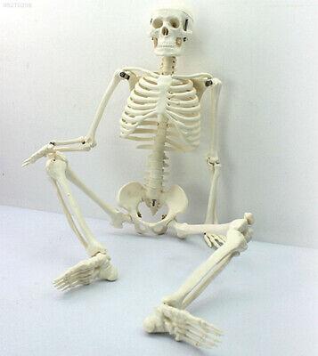 Ec54 Full Body Pvc 45cm Human Anatomy Skeleton Medical Teaching Collectibles