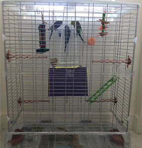 3 budgies and a cage
