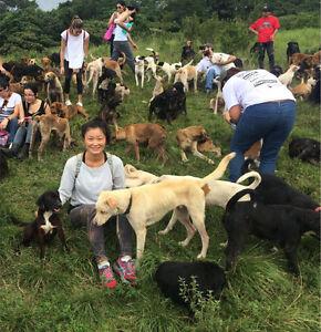 Dog walker / pet sitter McKinnon Glen Eira Area Preview