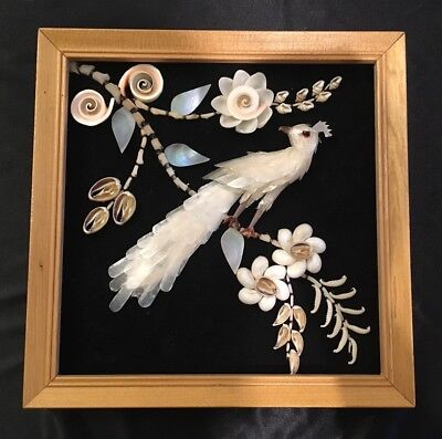 Peacock Shell Picture