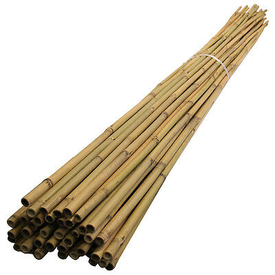 Bamboo Canes 2.4m Gardeners 50 Pack 18-20mm Thick 8ft Plant Support Vegetable