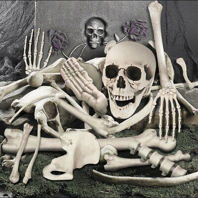 Halloween Life Size Plastic Skeleton Bone Skull Posable Prop Outdoor Indoor 35PC