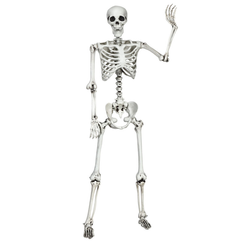 5.4ft Halloween Skeleton Life Size Realistic Full Body Hang w/ Movable Joints