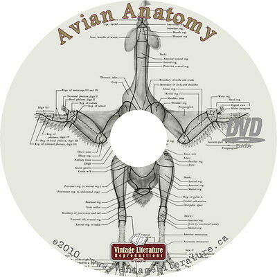 Avian Anatomy ~ Bird Medical Reference & Rescue Book { 772 Pages } on DVD