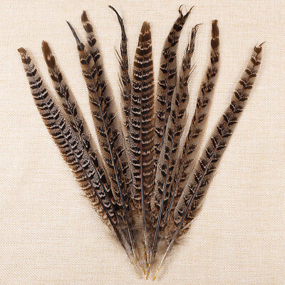 10PCS Natural Pheasant Tail Feathers 10-12 Inch Long DIY Craft Decoration