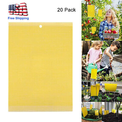 20Pcs Sticky Fly Trap Paper Yellow Traps Fruit Flies Insect Glue Catcher (Best Fruit Fly Trap)