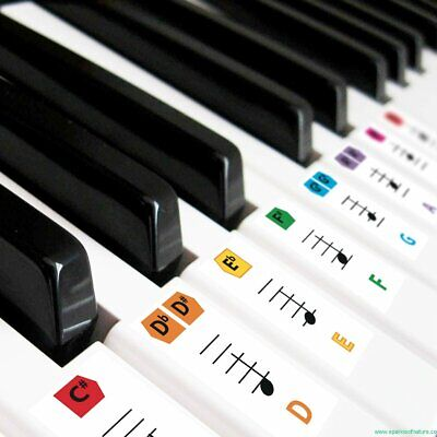 Best Reusable Large Color Piano Key Note Keyboard Stickers for Adults &