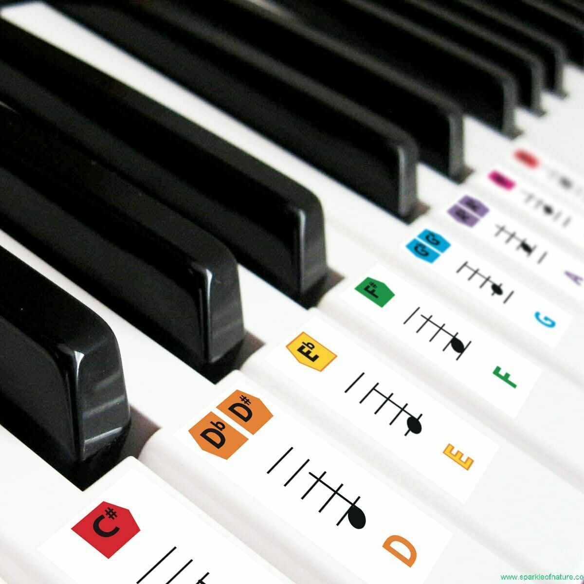 Best Reusable Large Color Piano Key Note Keyboard Stickers f