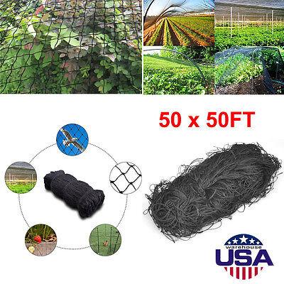 50x50 Anti Bird Netting Garden Poultry Aviary Game Net Nylon 2.0 Mesh New Ec