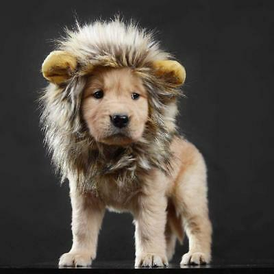 New Halloween Lion Mane Costumes for Cute Pet Cat Dogs Free Feathered Catnip Toy
