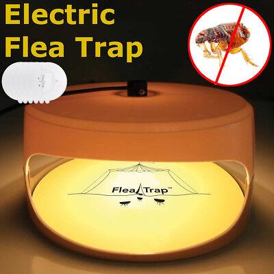2018 Sticky Dome Flea Trap Refill Non-Poisonous 12 Glue Discs Safe Long (Dome Trap)