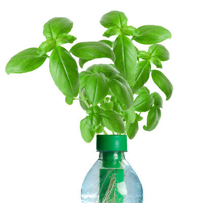 PETomato™ Hydroponic Basil Plant Growing Kit ASI9806 by Kagan