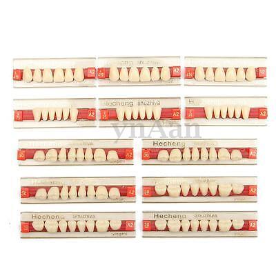 3 Set Of 841 Acrylic Resin Denture Teeth Vita Color A2 Upper Lower Shade Dental