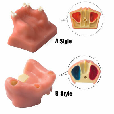 Dental Model Easyinsmile Sinus Lift Practice Model Study Education Teeth Model