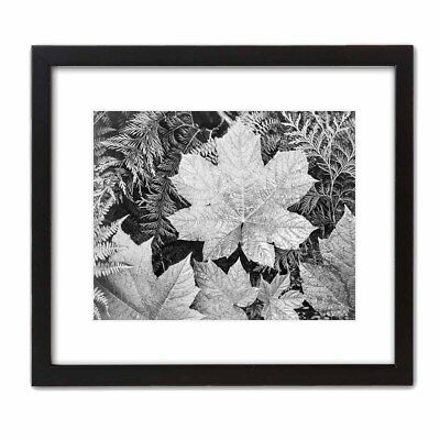 Ansel Adams Black And White - Historic Art Photo ANSEL ADAMS: LEAVES Famous Black & White Photograph NATURE