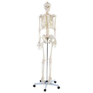 Orientation in human anatomy |