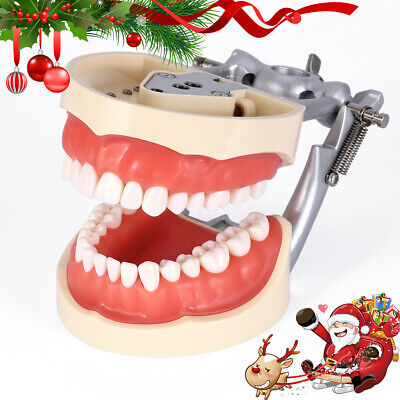 Dental Typodont Model Kilgore Nissin 200 Type With Removable Teeth Soft Gingiva