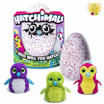 Hatchimals Hatching Egg Draggle By Spin Master   Purple  Green  Red Toy Gift