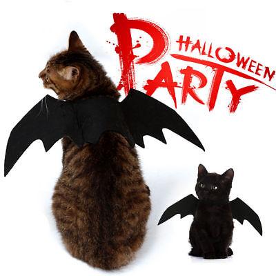 Katze, Vampir Kostüm (1X Tier Haustier Hund Katze Fledermaus Vampir Halloween Kostüm Outfit Flügel IR)