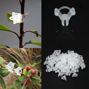 100pcs clip pince greffer greffage plante l gume fleur. Black Bedroom Furniture Sets. Home Design Ideas