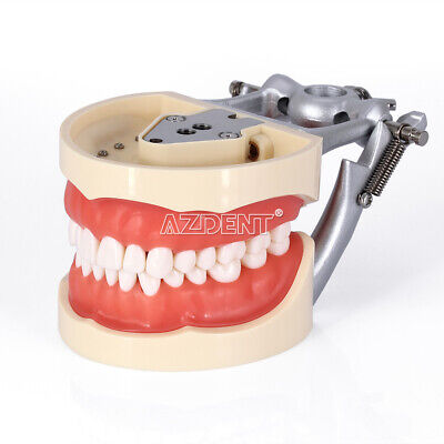 Kilgore Nissin 200 Type Dental Typodont Model With Removable Teeth Usa