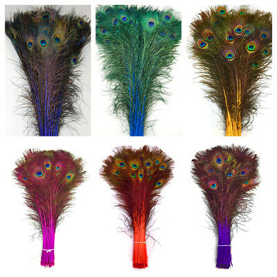 DYED PEACOCK Feathers 30-45