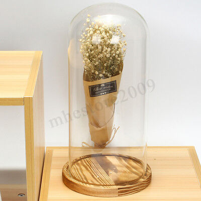 """Clear Glass Display Dome 13"""" x 6"""" Cloche Bell Jar With Wooden Base Display Stand"""