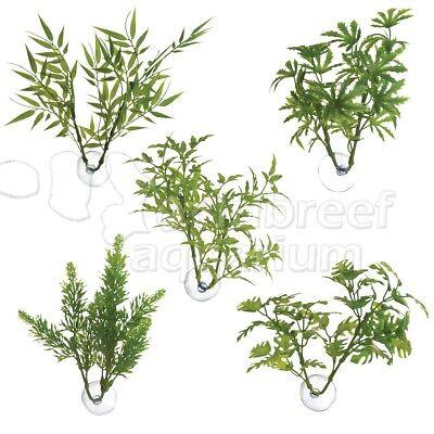 Betta Plant Bamboo/Papaya/Maple/Salvia/Window Leaf Suction Cup Mount Zoo -