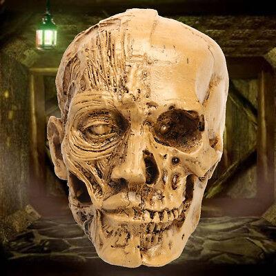 3.5 9cm Resin Human Skull Model Anatomical Medical Teaching Skeleton Head