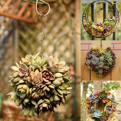 Iron Flower Wall Decor - Hanging Flower Pot Iron Wall Succulent Planters Rustic Plant Holder Home Decor
