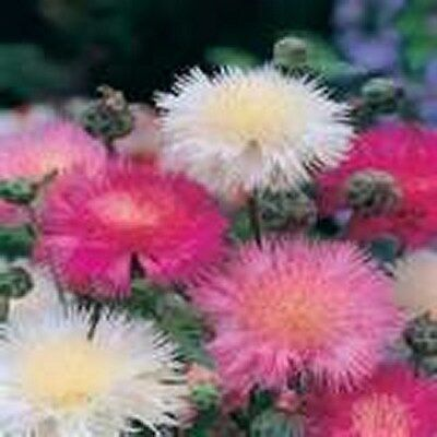 Sweet Sultan- Mix- 100 Seeds -  -