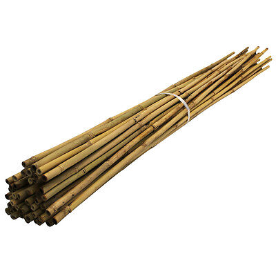 1.5m/5ft Bamboo Canes | 14-16mm | Thick Garden Plant Support Poles | 100 pack