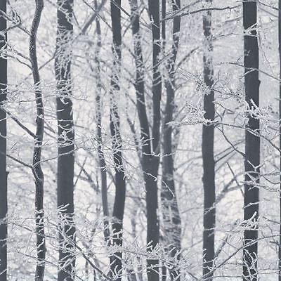 Givré Bois Papier Peint - Arthouse 670200 Bouleau Argenté Forêt