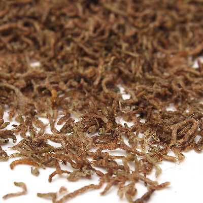 60g Freeze Dried Blood Worm Fresh Tropical Fish Discus Tetra Food Feeding